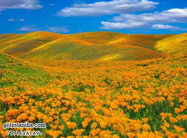 تصاویری زیبا و دل انگیز از طبیعت بهاری